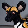 Hamisi the African Wild Dog