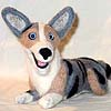 Maelgwyn the Cardigan Welsh Corgi